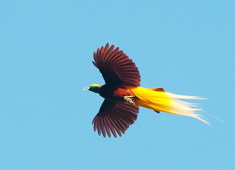 چسب پرنده جنس پر : جنس پر پرنده جذب و چسب .
